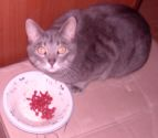 cat eating goji